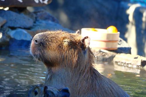 ポイントで無料旅行! 温泉 京都の人気な高級ホテルに宿泊ならSPGアメックス!『翠嵐』がおすすめ 京都旅行